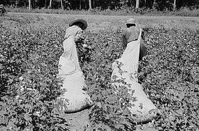 The gallery for --> Southern Cotton Plantations 1800s  Cotton Plantations 1800s
