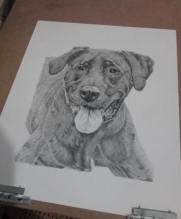 Wildlife Amp Pet Fine Art Sketchbook By Tara Tiberio