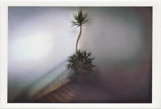 dirty photos - a - dark photo of plant