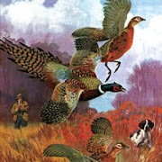 pheasantpic
