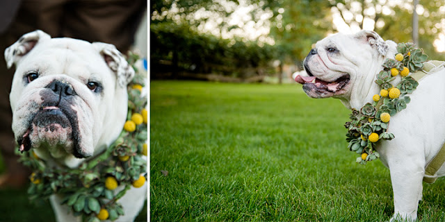 {Trends We Love} Puppies in Weddings