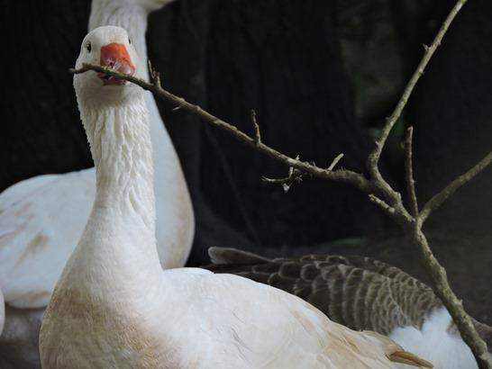Patos são belos - gurias gata - beleza em fotos
