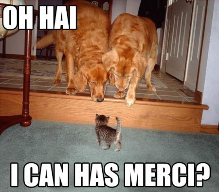 funny cat picture - funny cat pictures-lolcat-kitten-with-big-dogs-oh-hi-can-i-have-mercy1