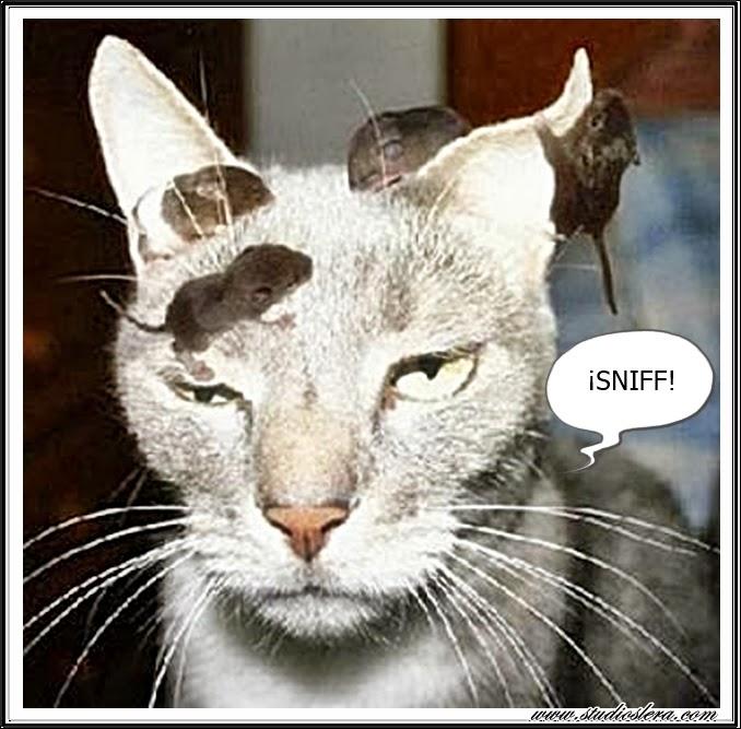 studioslera.com gato ratones humor