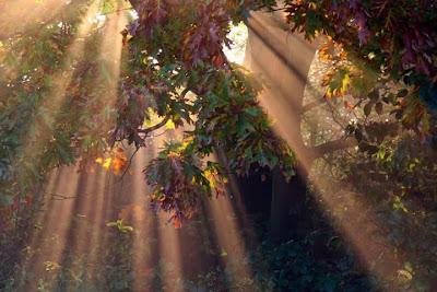 la luz que entra por todos los rincones Fotografias de otoño
