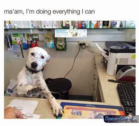 funny desk dog picture