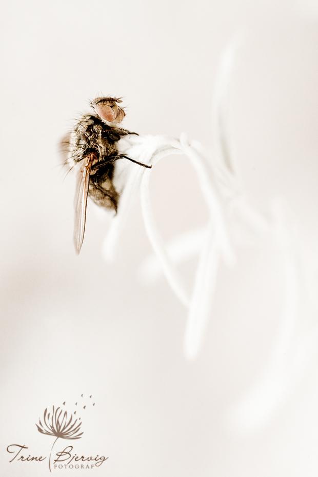 portrett av død flue på plante trine bjervig, fotograf tønsberg
