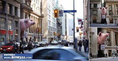 Babi Besar Tersepit Celah Bangunan  Biggest pig stuck middle Building