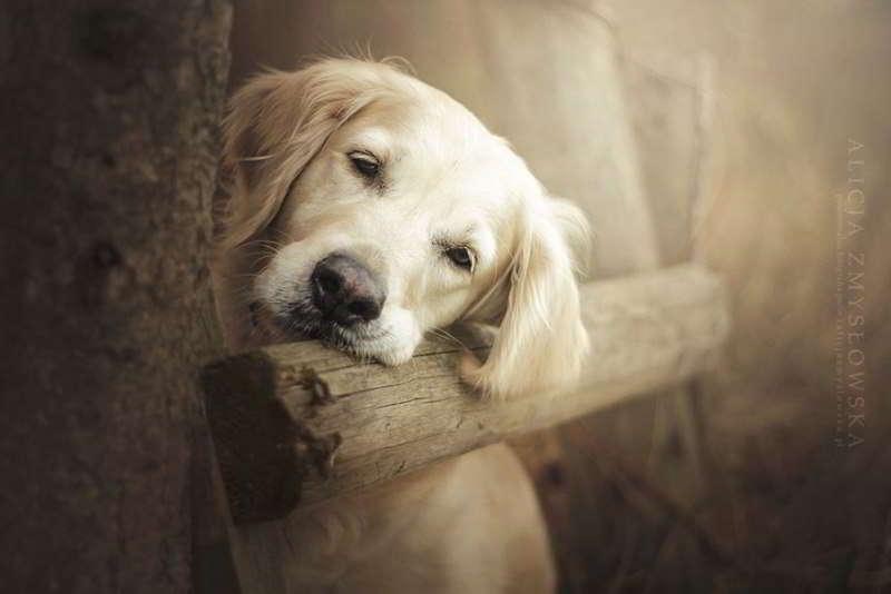 dog-photography-alicja-zmyslowska-06