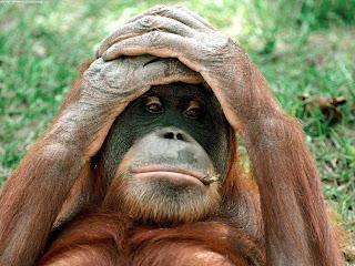 texk repot orangutan
