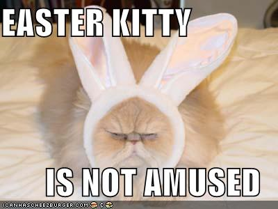 funny easter kitty