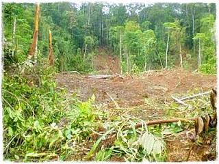 Penyebab Kerusakan Ekosistem