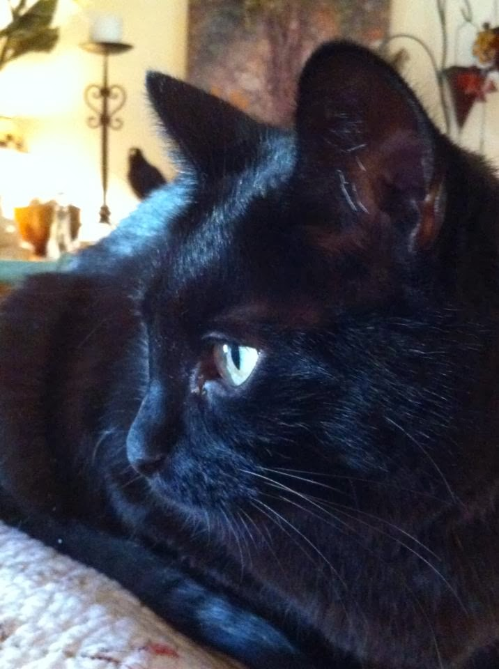 Habib.  My little panther...may you rest in peace.  I miss your loving nature every day.