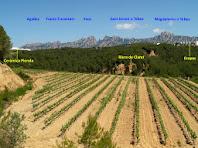 Panoràmica del sector occidental de Can Mata de la Garriga. En primer terme observem grans camps de vinyes, al fons la muntanya de Montserrat i entremig els aflorament d'argiles vermelloses de la Riera de Claret