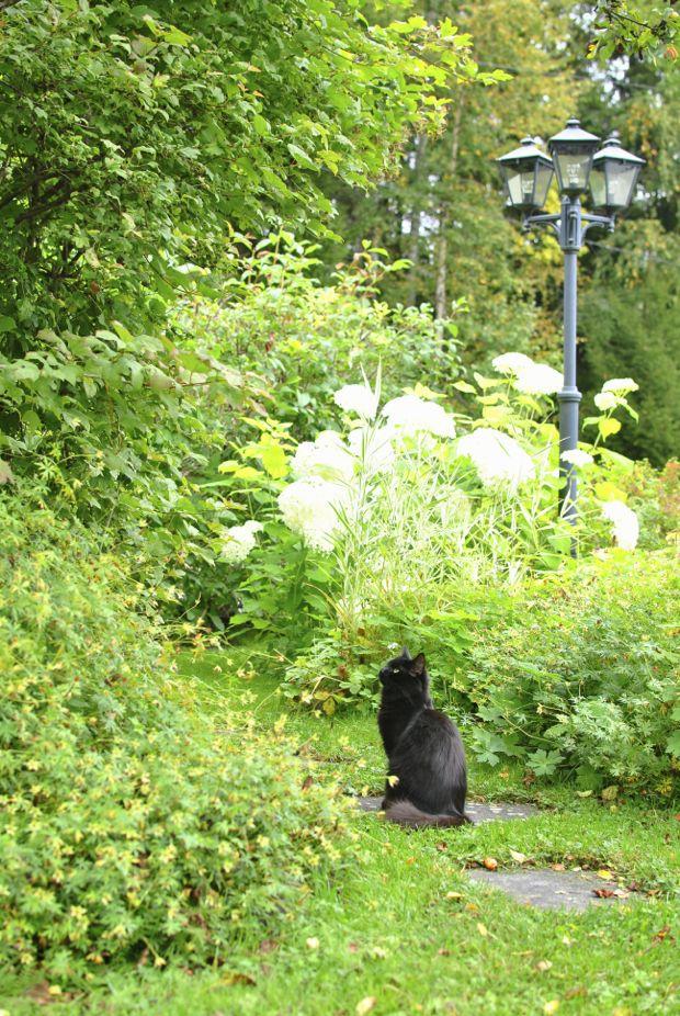 svart katt höst trädgård
