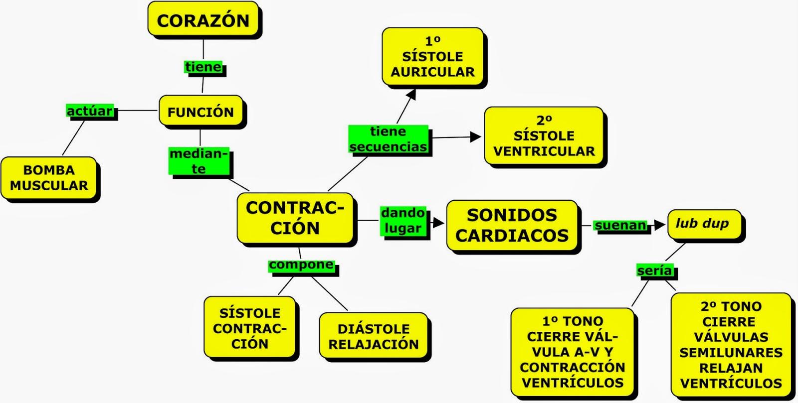 MAPAS CONCEPTUALES SOBRE SISTEMA CIRCULATORIO: EL CORAZÓN   MAPAS ...