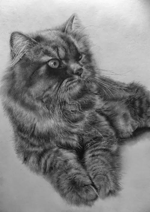 24-Hyper-realistic-Cats-Pencil-Drawings-Hong-Kong-Artist-Paul-Lung-aka-paullung-www-designstack-co
