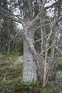 träds sätt att visa kärlek