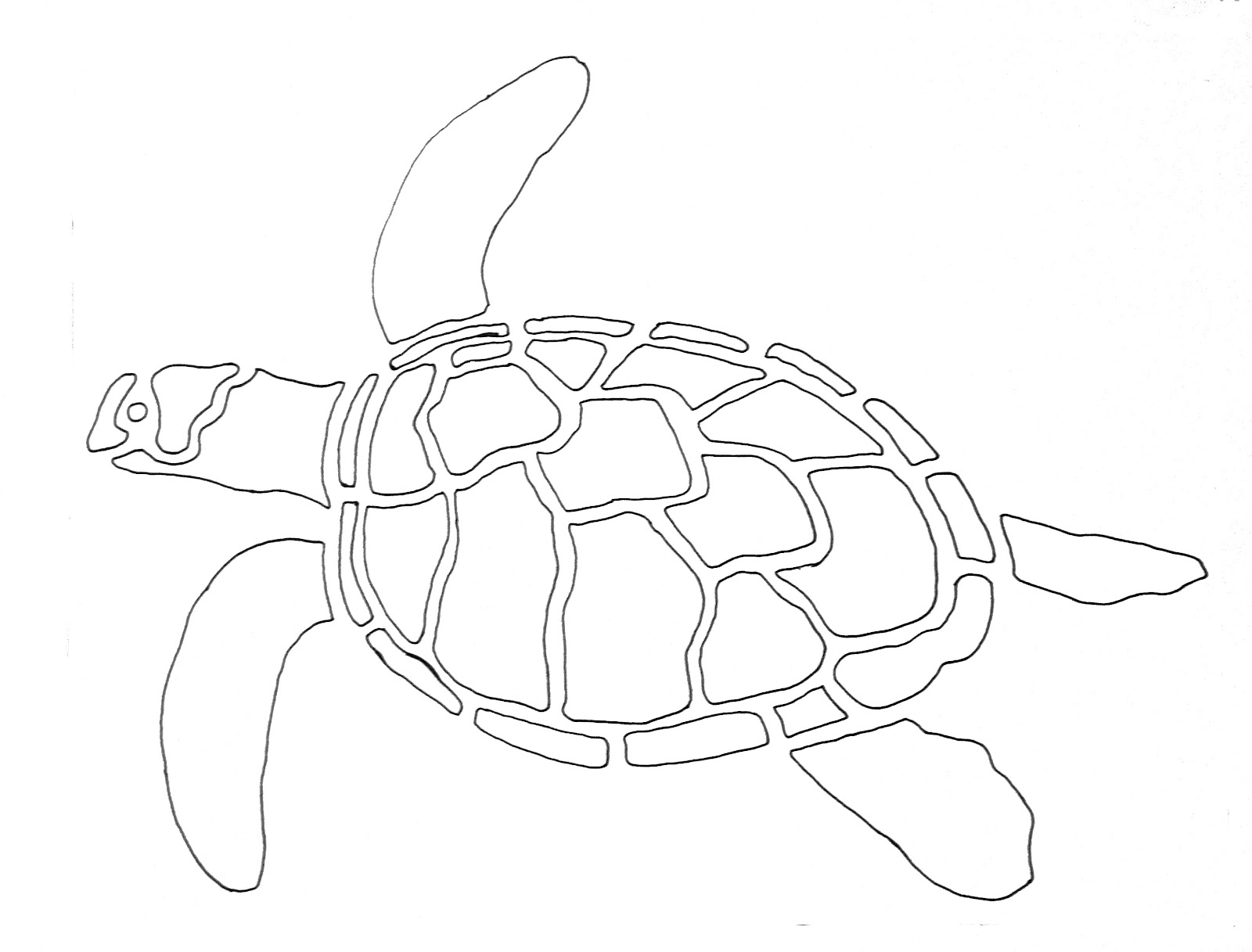 Template For A Green Sea Turtle Drawing Pictures to Pin on