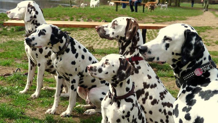 Giulie,Lexi,Amber,Greta und Hetty auf Doggie Island