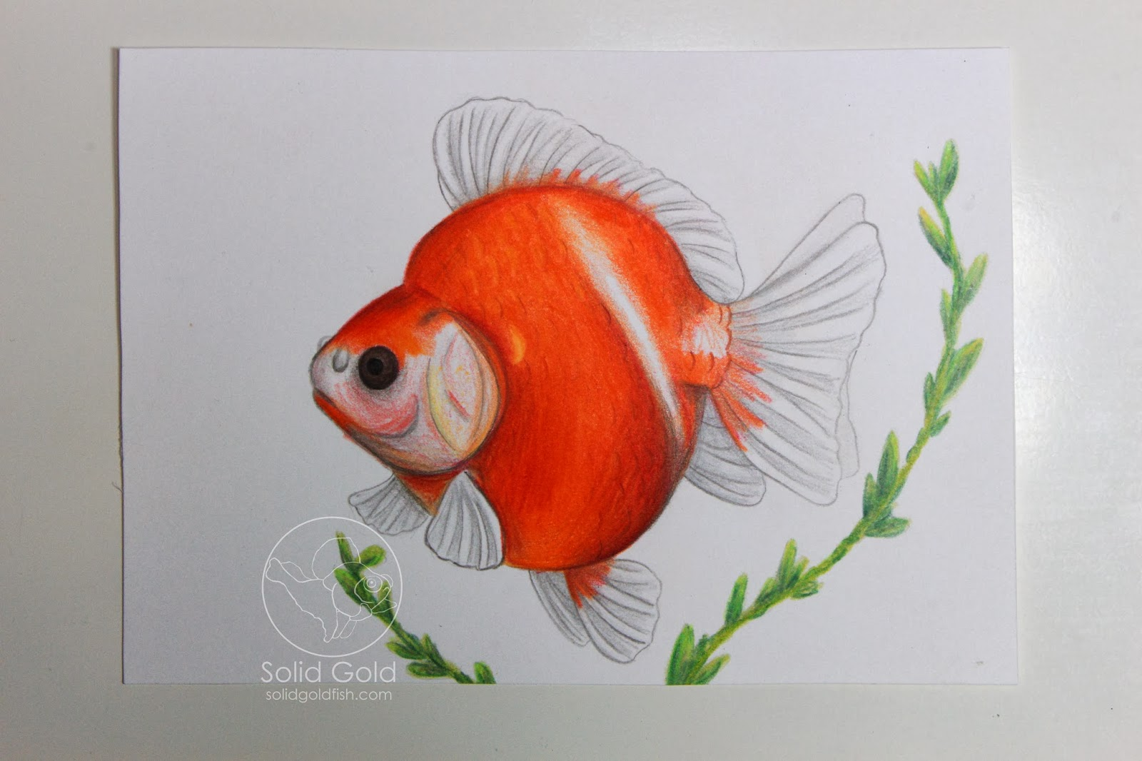 Solid Gold Sketchbook – Solid Gold Aquatics