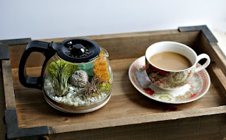 Creative Handmade Make A Coffee Pot Terrarium