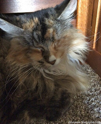 Lucy the blind cat is processing the death of a senior cat