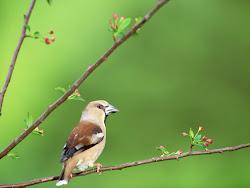 gambar burung kecil, foto burung, wallpaper burung