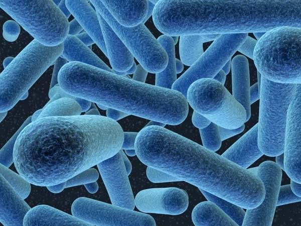 Novo antibiótico é descoberto 30 anos após última grande classe