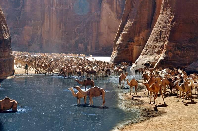 Guelta d'Arshey | Amazing lake in Sahara Desert