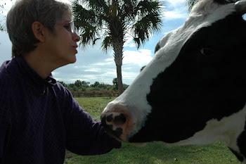 Gracias a las amorosas vacas obtenemos esti[ercol para la Terapia Homa.