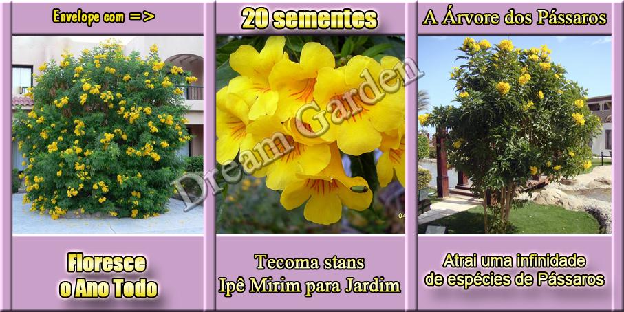roubo de anao de jardim : roubo de anao de jardim:Ipê Mirim Anão De Jardim Sementes Flor Para Mudas – R$ 7,99 em