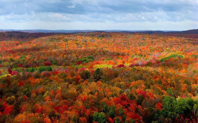 7 Things you Have to do this Fall in Michigan