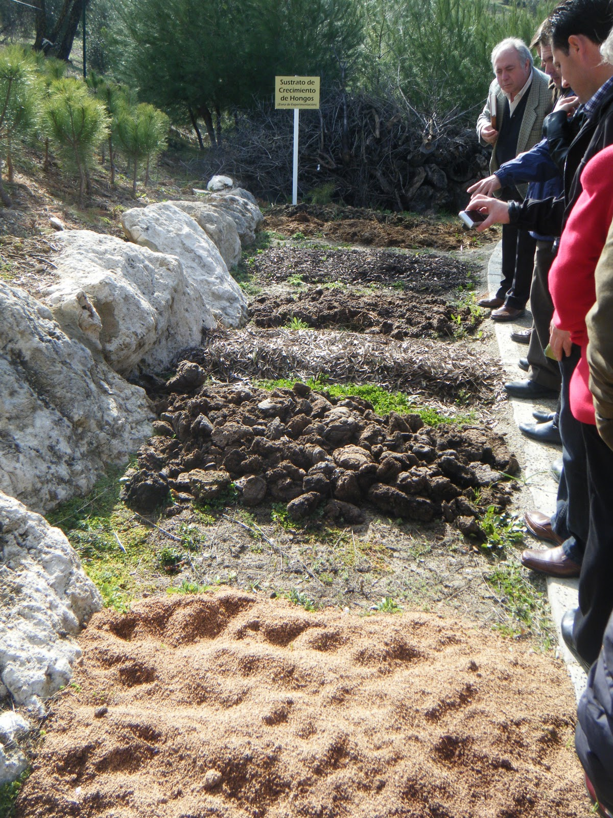 Subb tica natural rutas guiadas de naturaleza en la for Hongos en el jardin