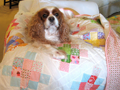 Emma Jane the dog with quilt