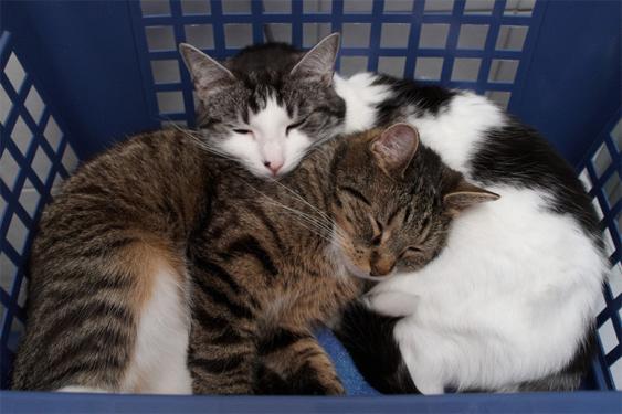 Kotia vaihtanut kissa voi elää täyttä elämää uudessa kodissaan.