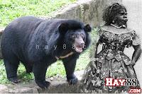 """""""Người phụ nữ lai gấu"""" duy nhất trong lịch sử"""