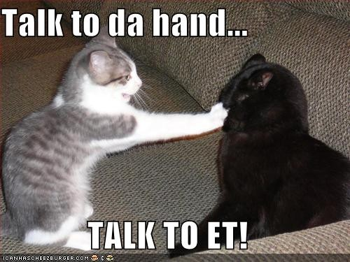 talk to the hand cat