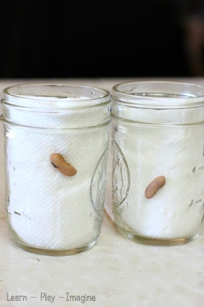 how to make paper cups to grow corn