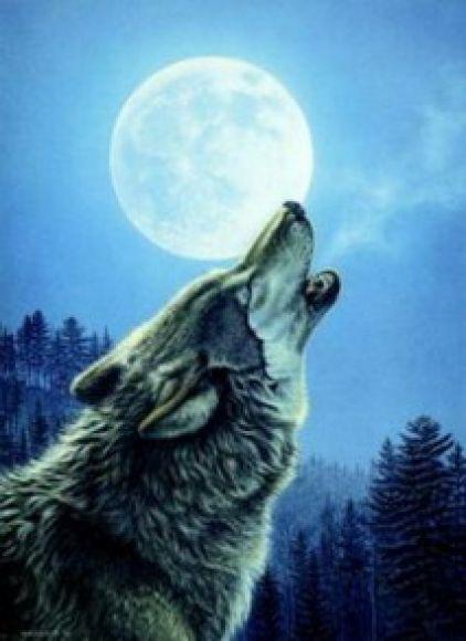 Noche de luna llena: El lobo y la luna