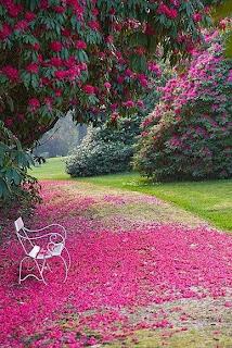 un manto rosa Fotografias de paisajes espectaculares