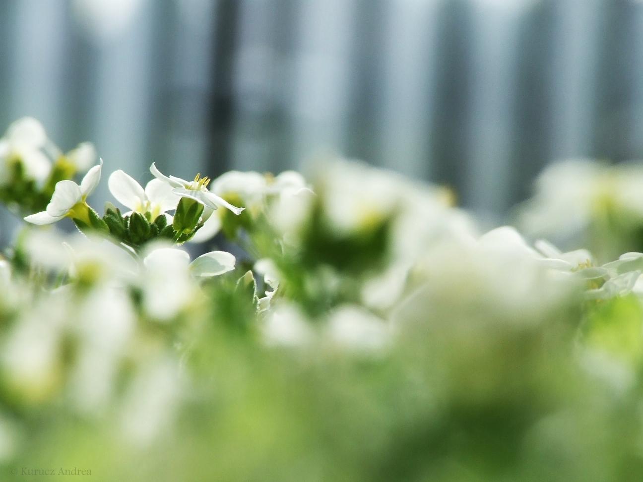 Titkos tavaszi kert/ Secret spring garden
