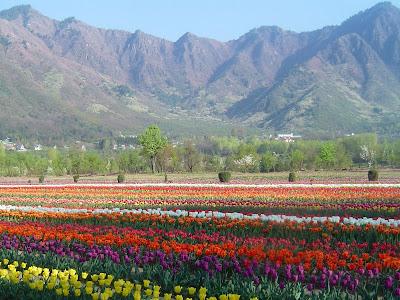 Flower garden  in Bhutan