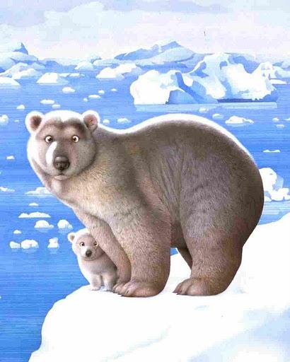 makoto muramatsu bear