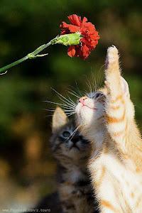 Maus tratos nunca mais; Liberdade e Democracia para os animais :)