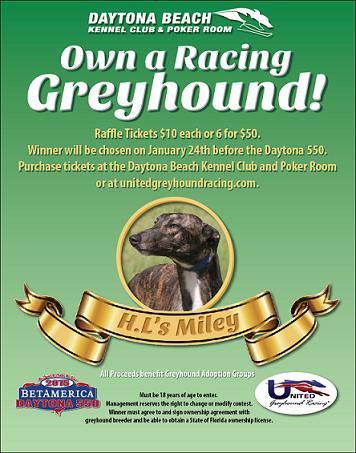 greyhound racing sunday