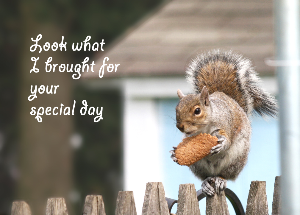 Funny animal greeting cards funny images and jokes covers and greeting cards funny squirrel cat greeting cards bookmarktalkfo