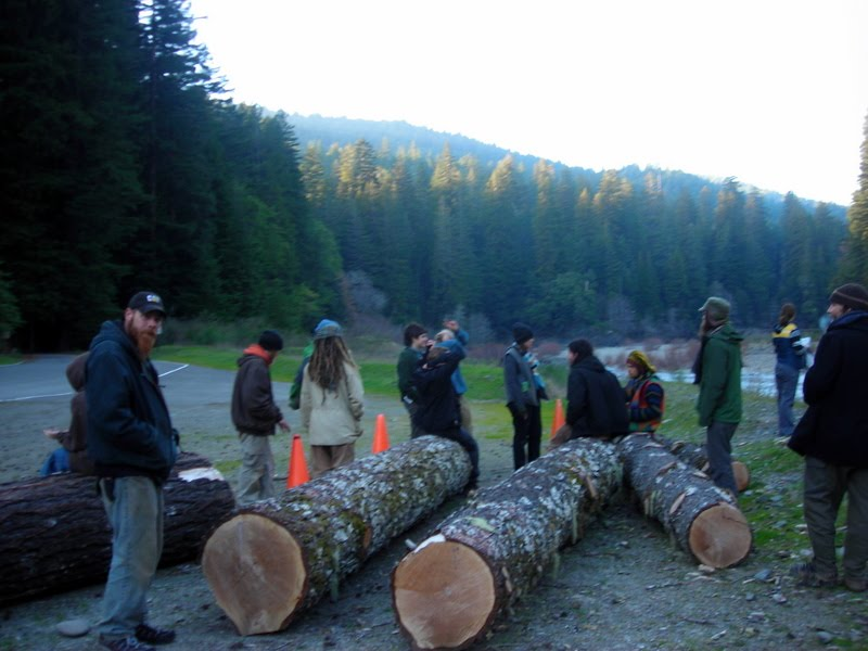 People by logs at Richardson Grove