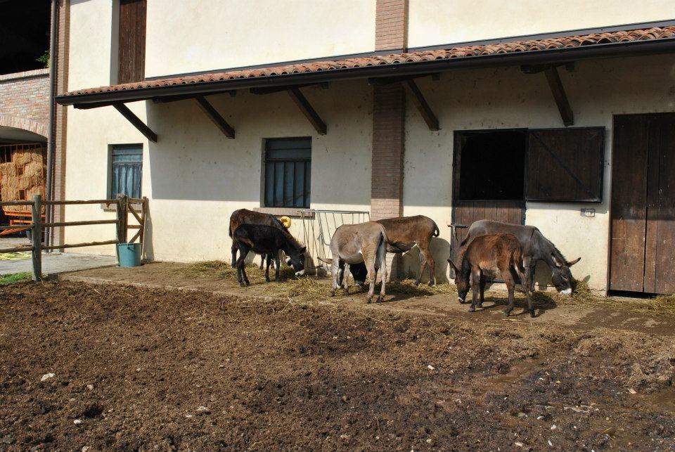 Agriturismo cergallina dove mangiare nei dintorni di for Piani di casa di fattoria di cavalli