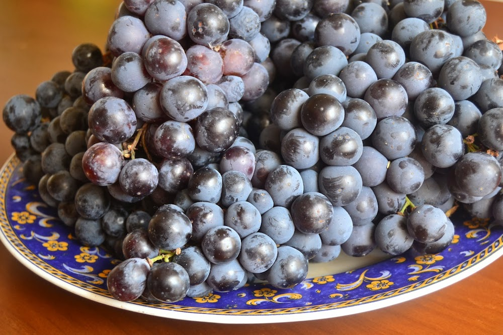 uva negra para hacer jabon